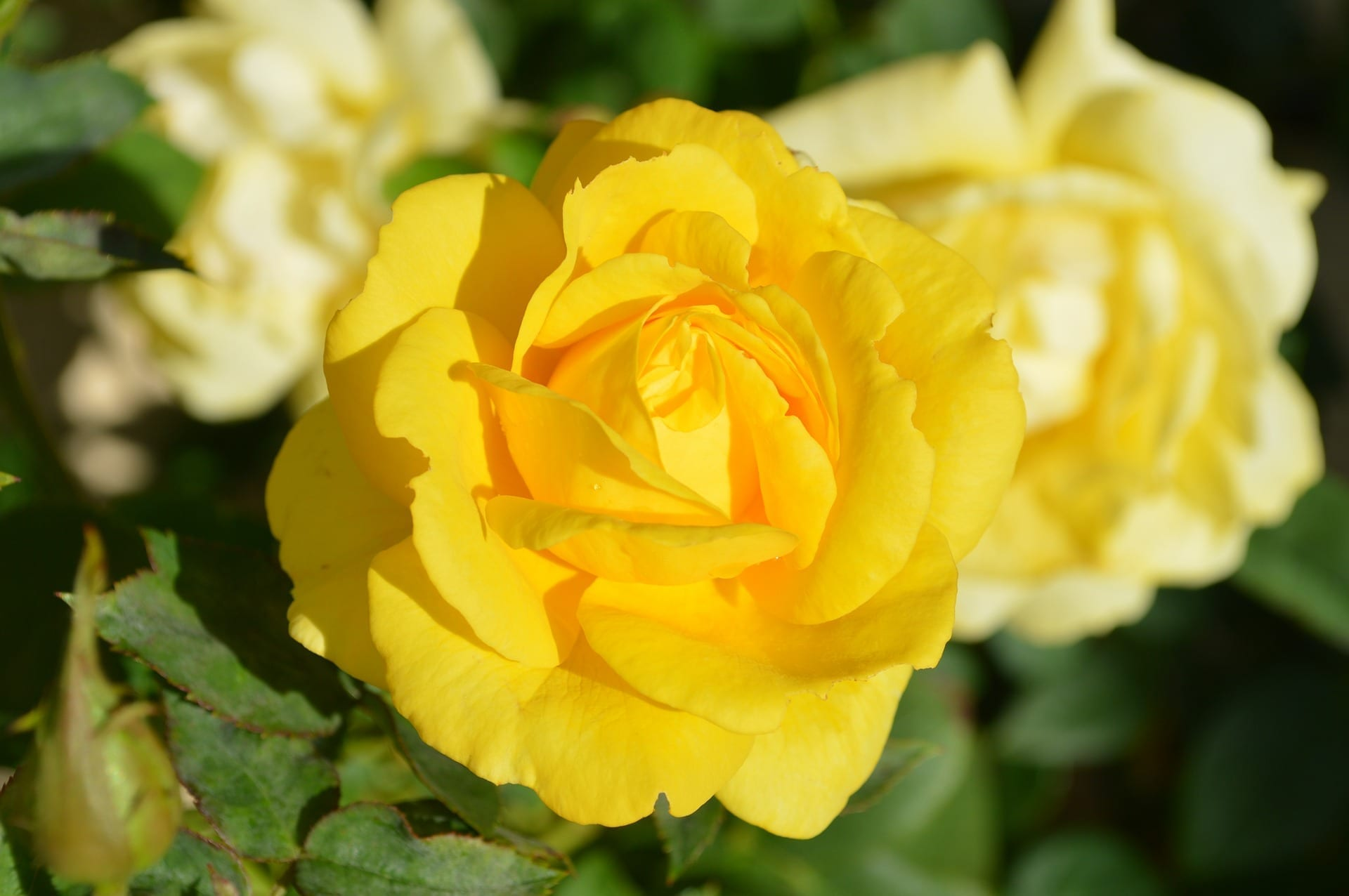 Research Fund Receives $600,000 for Cut Flower Advancements